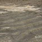 Tobisborg. Stora böljeslagsmärken i underkambrisk Hardebergasandsten. Ca 540 miljoner år gamla.