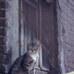 Katt i Rostov-na-Don, Ryssland
