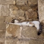 Cool cat i Rhodos stad